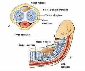 IPP - Dr.Campo Urologo Andrologo